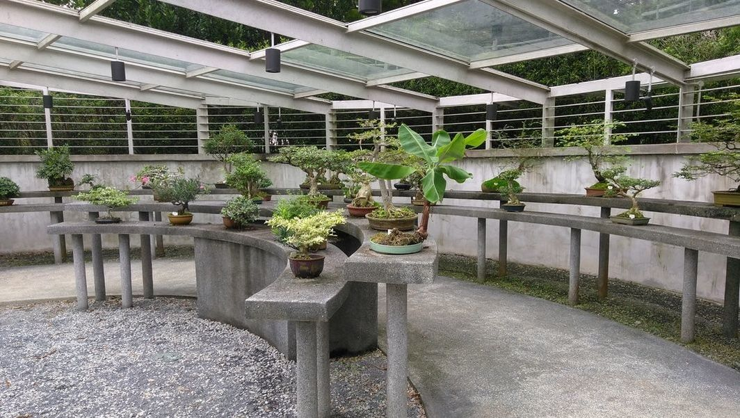 Picture of Bonsai trees at the Botanical Garden.