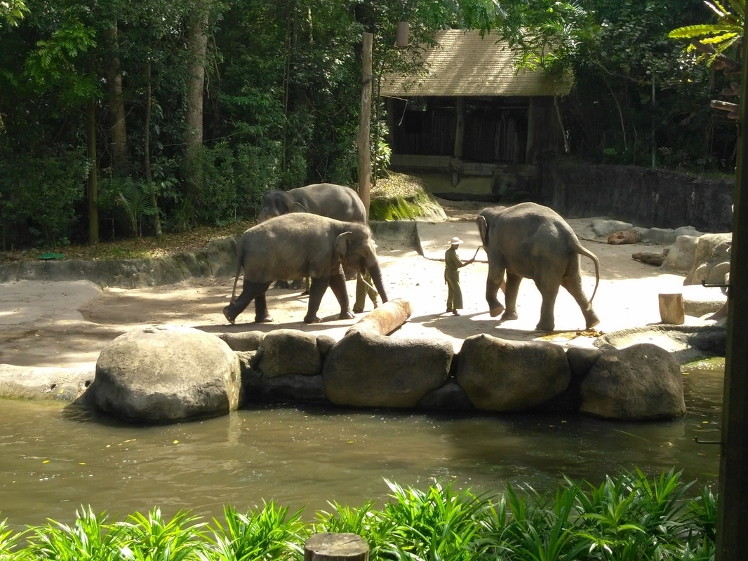 Picture of elephants at the zoo.