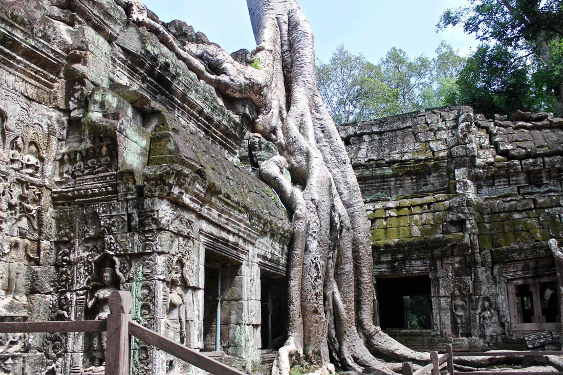 Tree growing into the walls of Ta Prohm