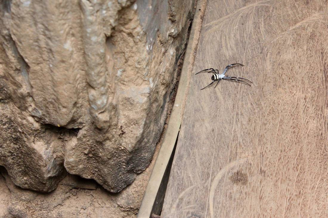 Large spider at the rear entrance to Ta Prohm
